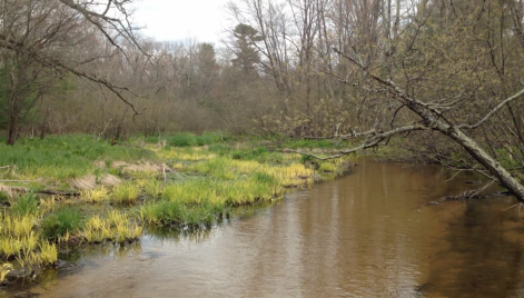 The Little Plover River in June, 2014. Remarkably, this idyllic spot is just a few hundred feet from I-39.